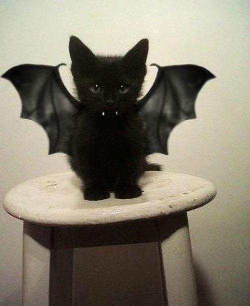 gato-vampiro